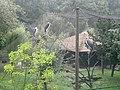 Storks (7822231352).jpg