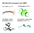 Strukturella grupper hos AMP.png