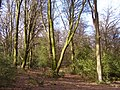 Stubbs Wood, New Forest - geograph.org.uk - 145243.jpg