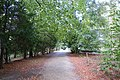 Studley Royal - Woodland Path - geograph.org.uk - 1006248.jpg