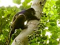 Sulawesi trsr DSCN0549 v1.JPG