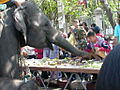 Surin elephants 27.jpg
