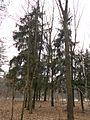 Svydivok, Cherkas'ka oblast, Ukraine - panoramio (41).jpg