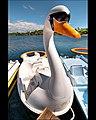 Swan Pedalo in Portugal (6121310240).jpg