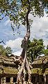 Ta Phrom, Angkor, Camboya, 2013-08-16, DD 30.JPG