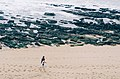 Taking A Walk On The Beach (88255423).jpeg