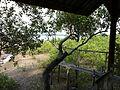 Taling Chan, Nuea Khlong District, Krabi 81130, Thailand - panoramio (6).jpg