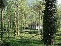 Tea plantation in India03.jpg