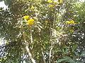 Temple Bell Tree YVSREDDY (3).jpg