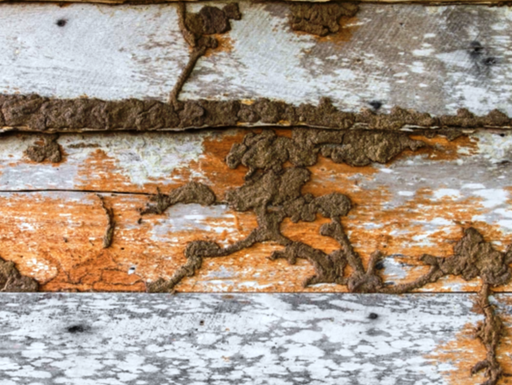 Termite droppings on wooden wall