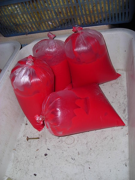 File:Thailand - Plastic bags with animal blood for human nourishment.JPG