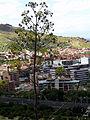 Thasia villosa Puertollano.jpg