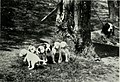 The American hunting dog - modern strains of bird dogs and hounds, and their field training (1919) (17962724079).jpg