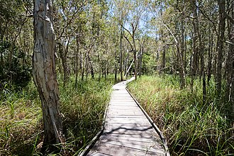 Burrum Coast National Park - Boardwalk at Burrum Coast National Park, December 2010
