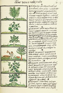 The Florentine Codex- Ethnobotanic Plants II.tif