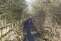 The Great Aycliffe Way - geograph.org.uk - 1111862.jpg