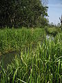 The North Walsham and Dilham Canal near Honing.jpg
