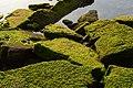The Rocks On The Seashore (66703717).jpeg