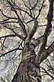 The Tree (8377686).jpeg