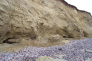 Thanet Formation - Grey sands of the Thanet Formation in the cliffs just east of Herne Bay