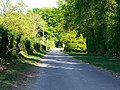 The road from South Lynch towards Standon, Hants - geograph.org.uk - 419809.jpg