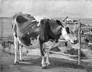Stående rødbroget ko