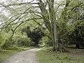 Through the woods - geograph.org.uk - 409491.jpg