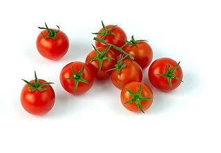 Cherry tomato a type of small tomato