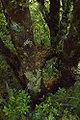 Tongariro Flora n.jpg