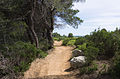 Trail, Pinet, Hérault 01.jpg
