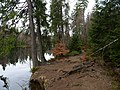 Trail at Silberteich 11.jpg