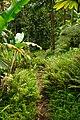 Trail to Aihualama Falls (5171249714).jpg