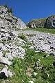 Trail up the Tour d'Aï (14487234274).jpg