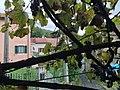 Trattoria Il Caminetto - Nenno Genova - panoramio (1).jpg