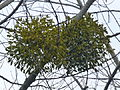 Tree 1240368.jpg
