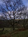 Tree by the trackside - geograph.org.uk - 657236.jpg