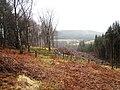 Tree clearing near Anya's Wood - geograph.org.uk - 1762868.jpg