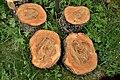 Tree cuts.jpg
