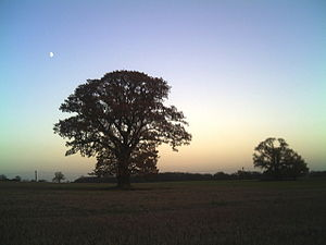 English: Tree silhouette near Witham This tree...