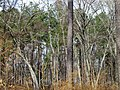 Trees, Jordan Lake SP NC 1479 (5487277564).jpg