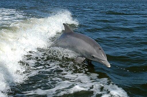 Nadar con delfines en México