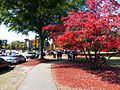 Tuskegee University -campus sidewalk.JPG