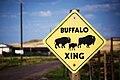 US-WY - Gleason - Sign - Buffalo - Road Trip - Chordata - Mammalia (4891893067).jpg
