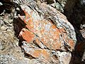 USA-Pinnacles National Monument-Bear Gulch Trail-3.jpg