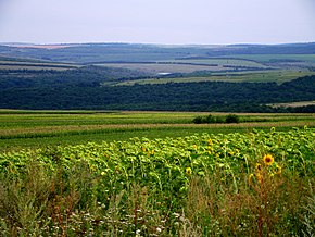 Unnamed Road, Vertiujeni, Moldova - panoramio (23).jpg