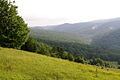 Up-Seneca-Valley - West Virginia - ForestWander.jpg