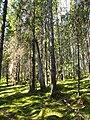 Vällingsjö urskog - skogen.JPG