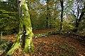 Velling skov.jpg