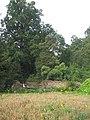 Veltrusy. Kuchyňská zahrada 17.JPG
