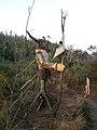 Ventotene, figura lungo i sentieri della scogliera sud 01.jpg